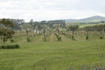 the view during a wander between wineries